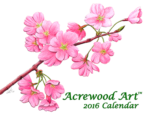 2016 Flowers Fine Art Wall Calendar, with drawings from Original Pen & Ink by Wayne Bricco, Acrewood Art