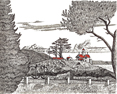 Battery Point Lighthouse I, from original pen & ink by Wayne Bricco, Acrewood Art