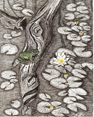 Coastal Lily Pond, from original pen & ink by Wayne Bricco, Acrewood Art
