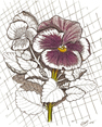 Grama's Pansy, from original pen & ink by Wayne Bricco, Acrewood Art
