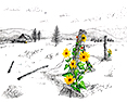 High Desert Sunshine, from original pen & ink by Wayne Bricco, Acrewood Art