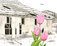 Old Tulip Barn, from original pen & ink by Wayne Bricco, Acrewood Art