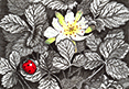 Searching for Strawberries, from original pen & ink by Wayne Bricco, Acrewood Art