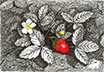 Strawberry Joy, from original pen & ink by Wayne Bricco, Acrewood Art