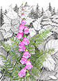 Wild Foxglove, from original pen & ink by Wayne Bricco, Acrewood Art